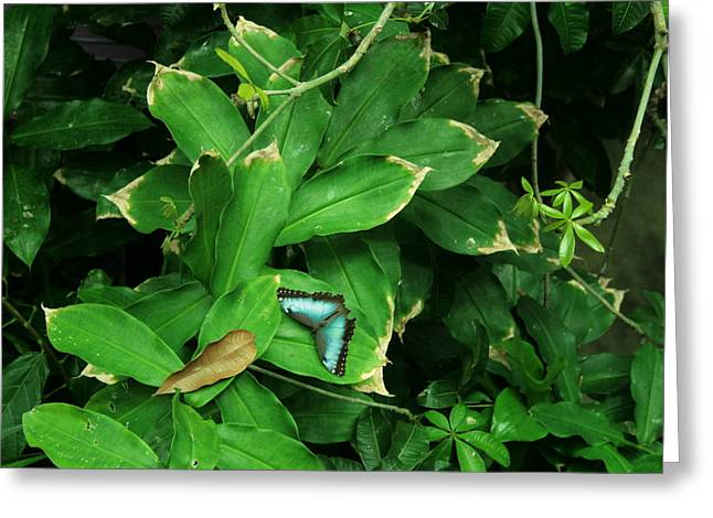 Butterfly In Rain Forest Greeting Card