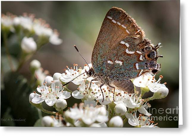 Greeting Card featuring the photograph Butterfly In The Garden by Todd Blanchard
