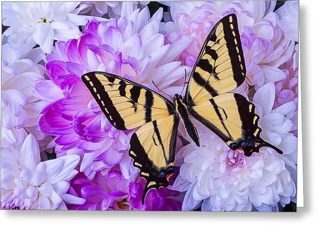 Butterfly In The Mums Greeting Card by Garry Gay
