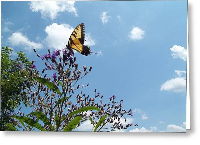 Butterfly In The Wild Greeting Card