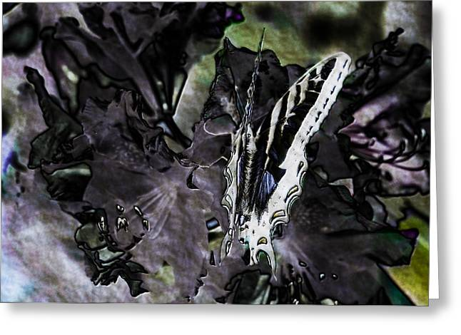 Butterfly In Violet Green And Black Greeting Card by Belinda Greb
