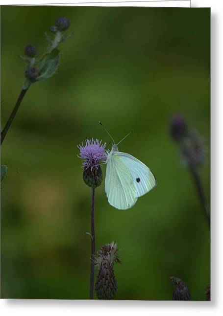 Butterfly In White 2 Greeting Card
