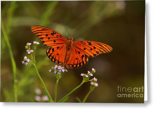 Greeting Card featuring the photograph Butterfly by J Cheyenne Howell