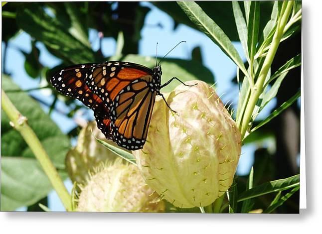Butterfly Greeting Card by Jennifer Wartsky