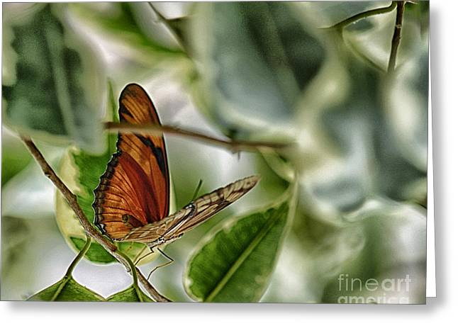 Butterfly Greeting Card by JRP Photography
