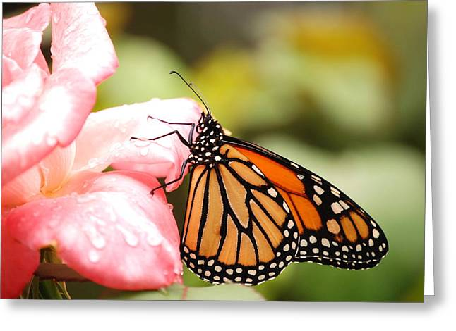 Butterfly  Greeting Card by Kathy Gibbons