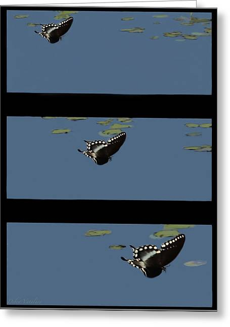 Butterfly Landing Greeting Card by Debra     Vatalaro