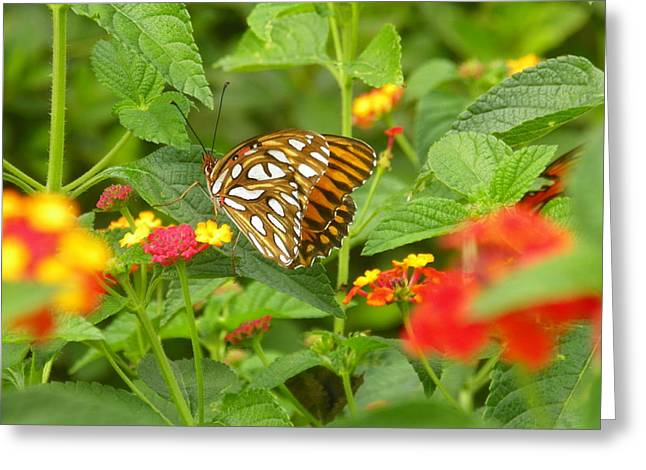 Butterfly 2 Greeting Card by Lisa Wooten