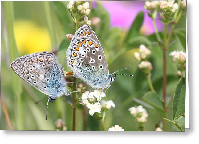 Butterfly Lovers Greeting Card
