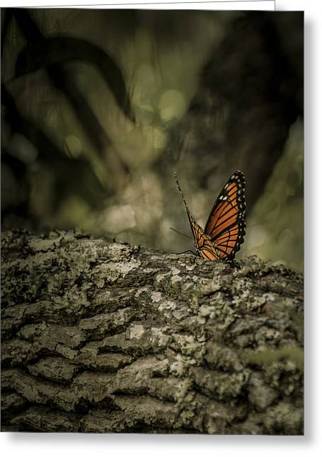 Butterfly Greeting Card by Mario Celzner