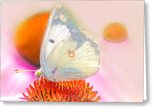 Greeting Card featuring the photograph Butterfly by Marion Johnson
