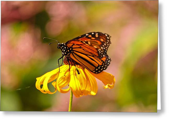 Butterfly Monet Greeting Card