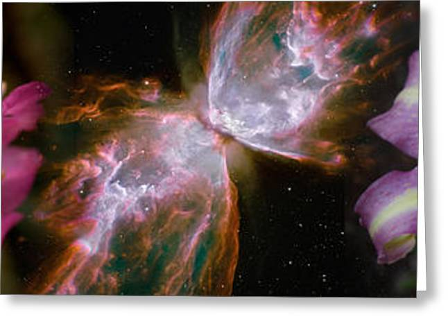 Butterfly Nebula With Iris And Pink Greeting Card