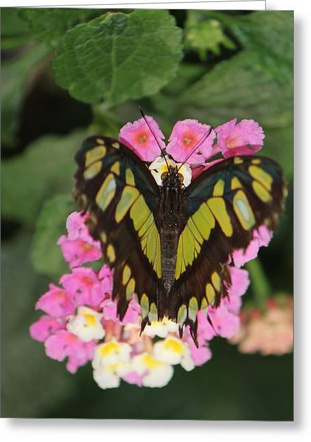 Butterfly Of Love Greeting Card by Bill Woodstock