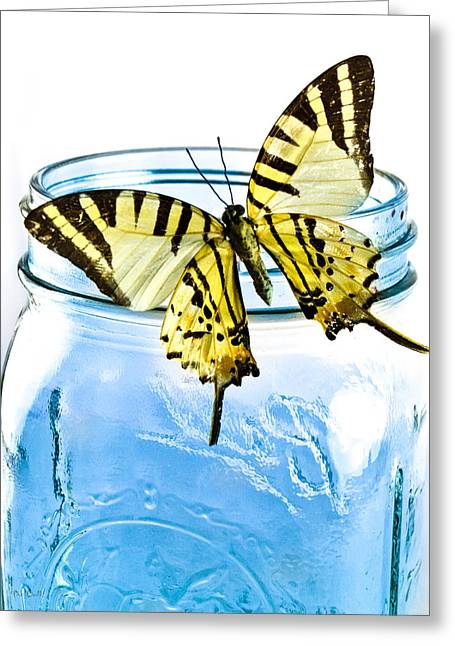 Country Photographs Greeting Cards - Butterfly on a blue jar Greeting Card by Bob Orsillo