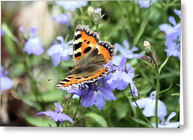 Butterfly On Blue Flower Greeting Card by Gordon Auld