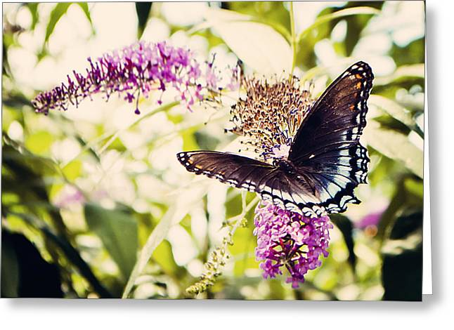 Butterfly On Butterfly Bush Greeting Card