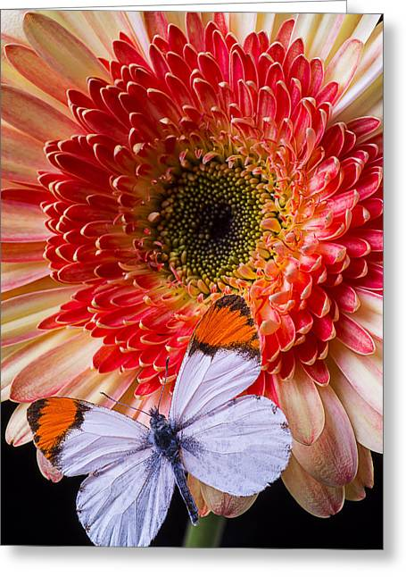 Butterfly On Daisy Greeting Card