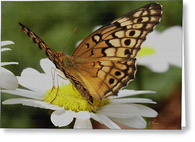 Greeting Card featuring the photograph Butterfly On Daisy by James C Thomas