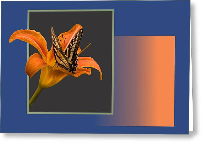 Butterfly On Day Lily Greeting Card