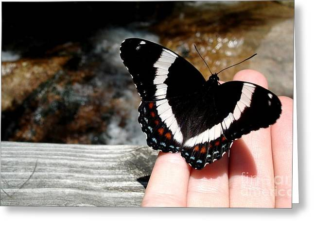 Butterfly On Fingertips Greeting Card