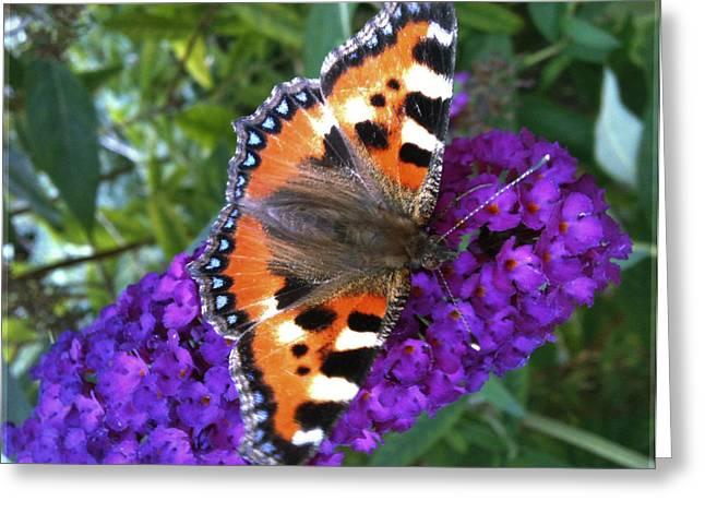 Butterfly On Flower Greeting Card by Beril Sirmacek
