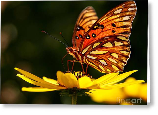 Butterfly On Flower Greeting Card by Joan McCool