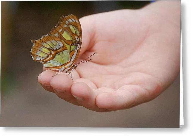 Greeting Card featuring the photograph Butterfly On Hand by Leticia Latocki