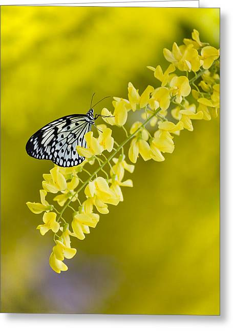 Butterfly On Laburnum Greeting Card