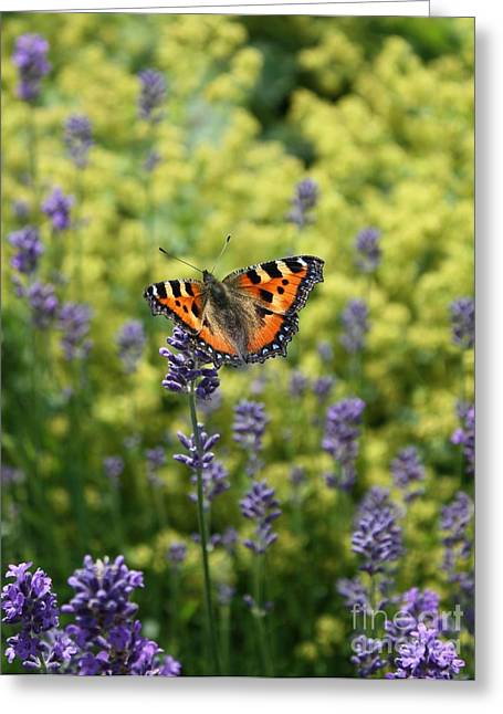 Butterfly On Lavender Greeting Card by Danielle Groenen