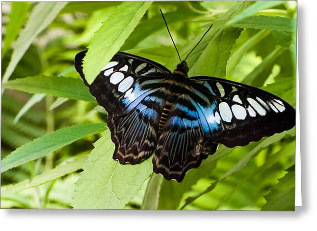 Butterfly On Leaf   Greeting Card by Lars Lentz