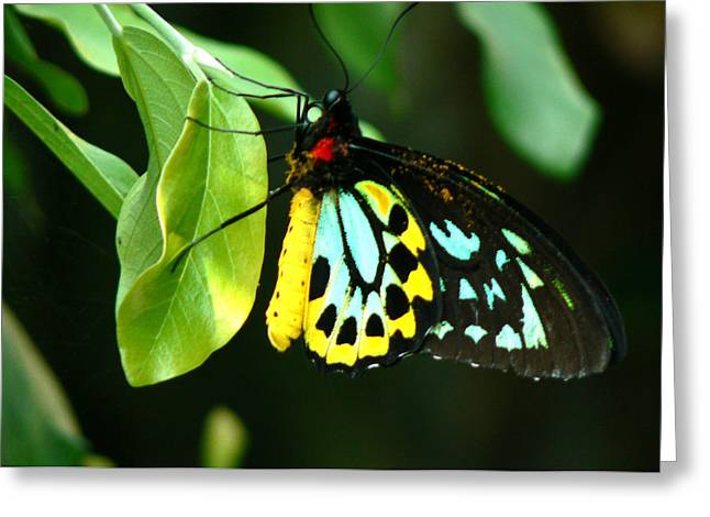 Butterfly On Leaf Greeting Card