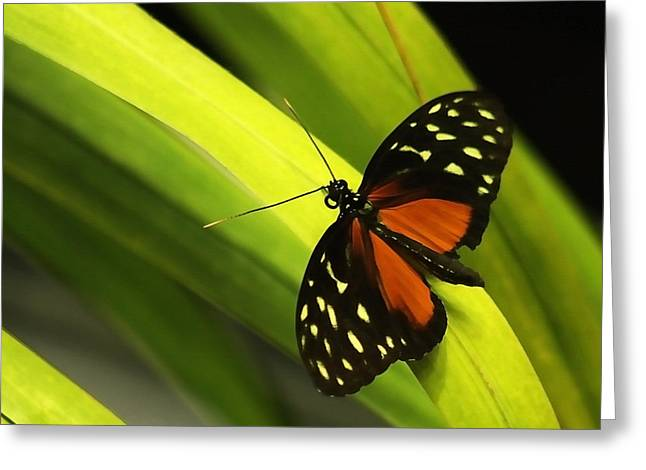 Butterfly On Leaves Greeting Card by Art Block Collections