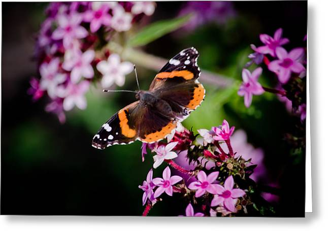 Butterfly On Penta Greeting Card
