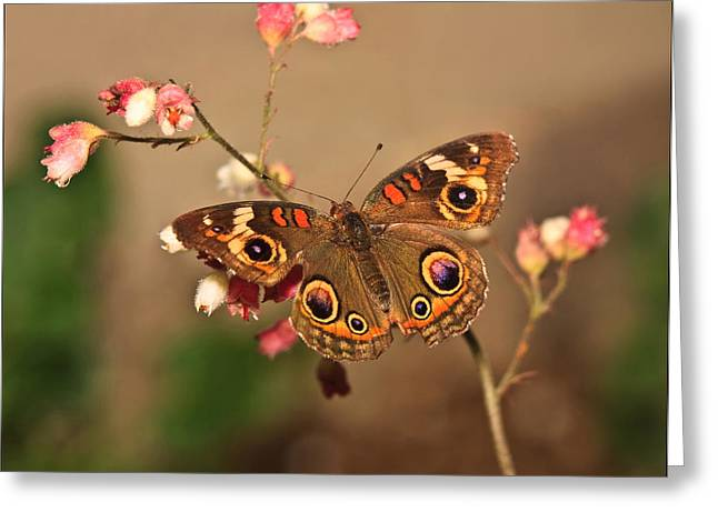 Butterfly On Pink Greeting Card