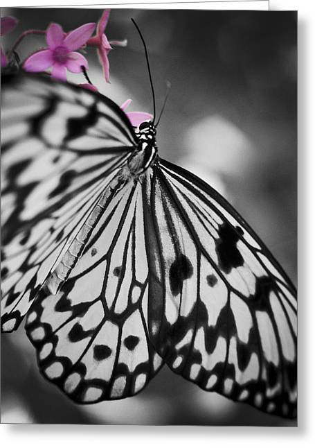 Butterfly On Pink Flowers Greeting Card by Bradley R Youngberg