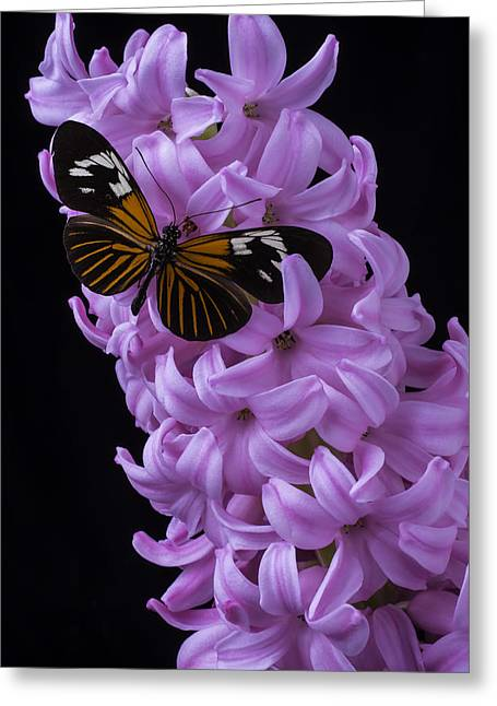 Butterfly On Pink Hyacinth Greeting Card by Garry Gay