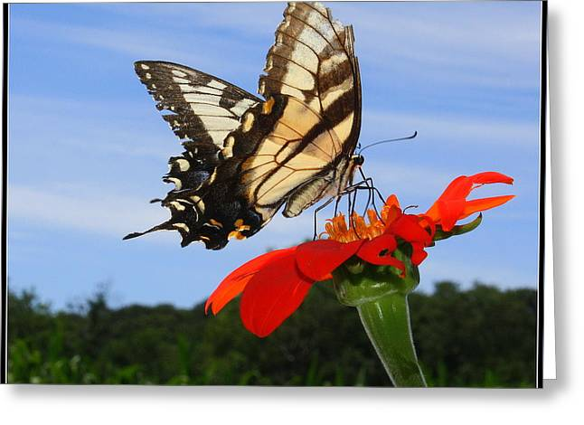 Butterfly On Red Daisy Greeting Card