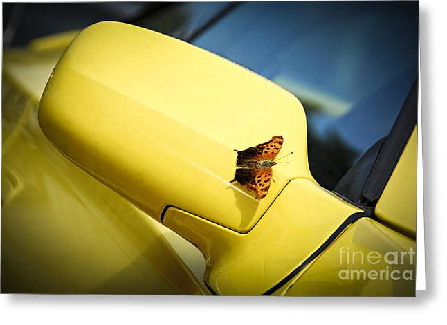 Butterfly On Sports Car Mirror Greeting Card by Elena Elisseeva