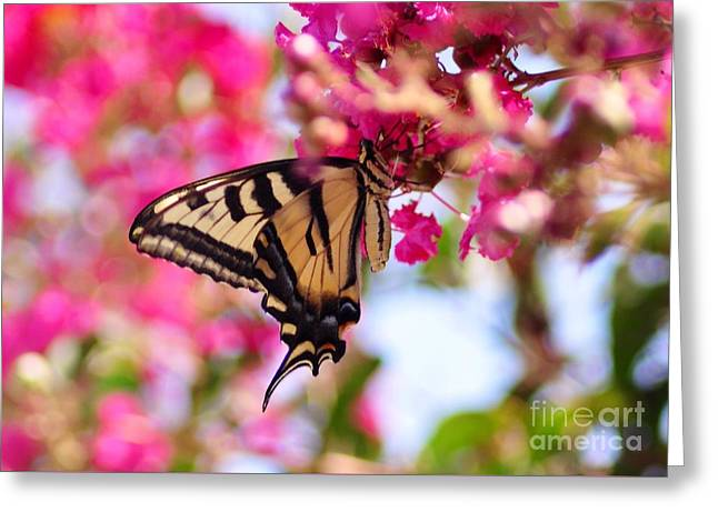 Butterfly On The Crepe Myrtle. Greeting Card