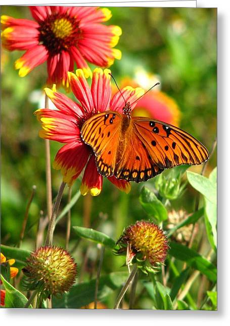 Butterfly One Greeting Card by Peggy Burley