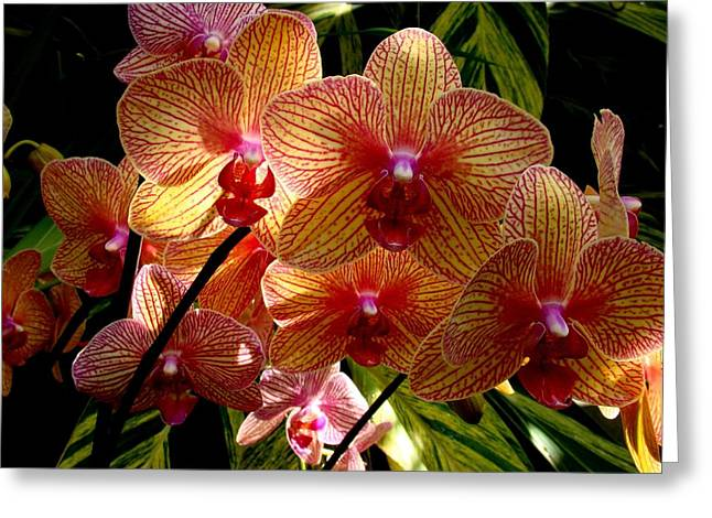 Greeting Card featuring the photograph Butterfly Orchids by Rodney Lee Williams