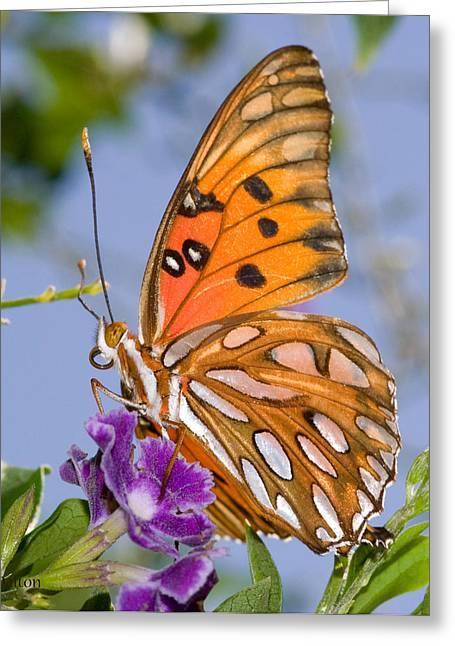 Butterfly Greeting Card by Paulette Moran Dalton
