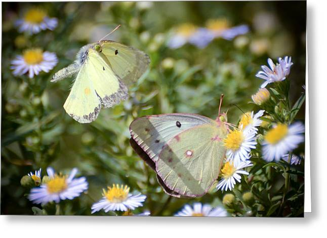 Greeting Card featuring the photograph Butterfly Moments  by Kerri Farley
