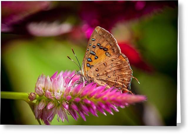 Butterfly Pink Sparkle  Greeting Card by Isabel Laurent