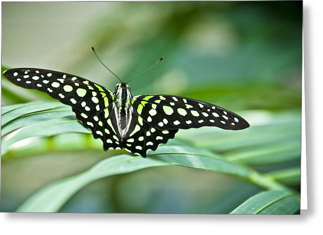 Butterfly Resting Color Greeting Card