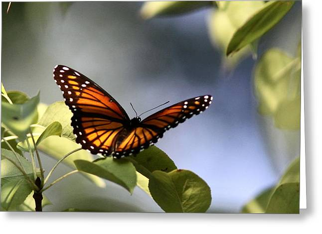 Butterfly -  Soaking Up The Sun Greeting Card