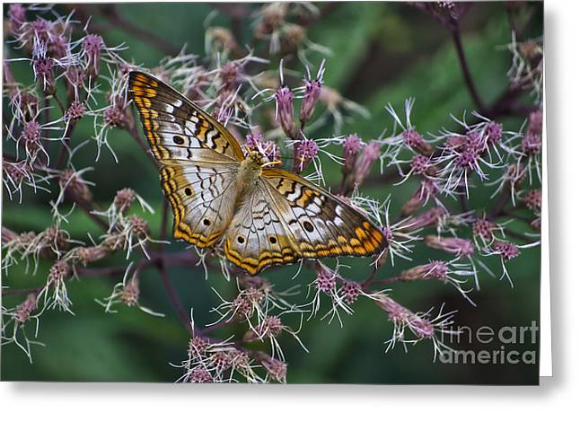 Greeting Card featuring the photograph Butterfly Soft Landing by Thomas Woolworth