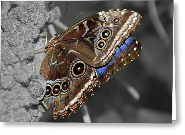 Butterfly Spot Color 1 Greeting Card by Bob Slitzan