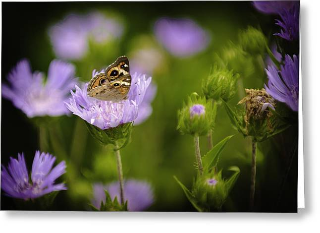 Butterfly Spotlight Greeting Card